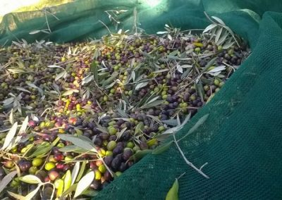 olive-3